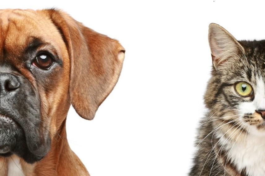 小寵物口腔異味不可以忽視