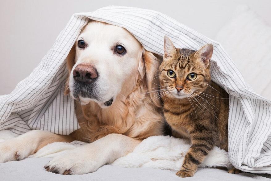 探討小寵物關節炎